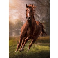 Clementoni 1500pc The Horse Jigsaw Puzzle